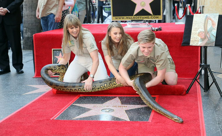 Image: Steve Irwin Honored Posthumously With Star On The Hollywood Walk Of Fame