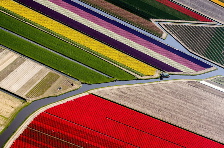 Image: Keukenhof flower fields in Lisse