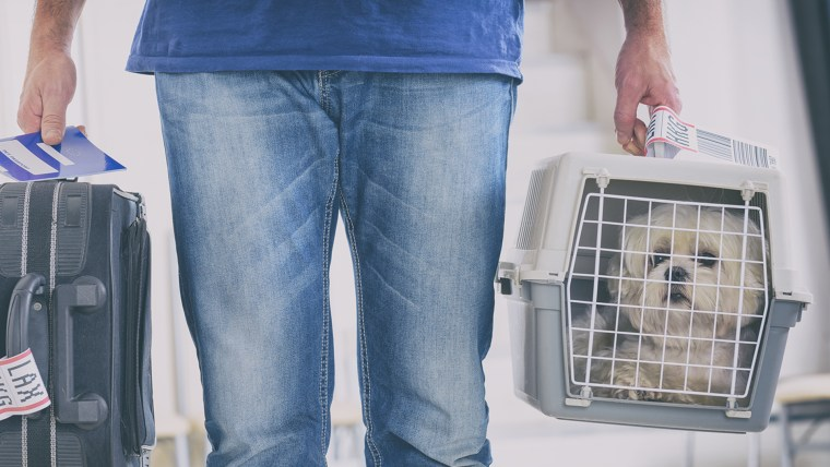 United Airline changes pet travel policy
