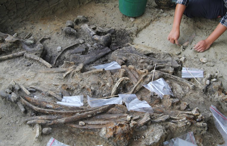 Image: An archaeologist works at the site of an archaeological dig where a treasure trove of tools and a nearly intact skeleton from a butchered rhinoceros