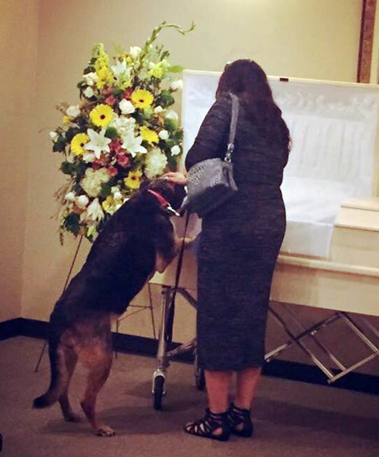 Grieving Dog finally gets closure