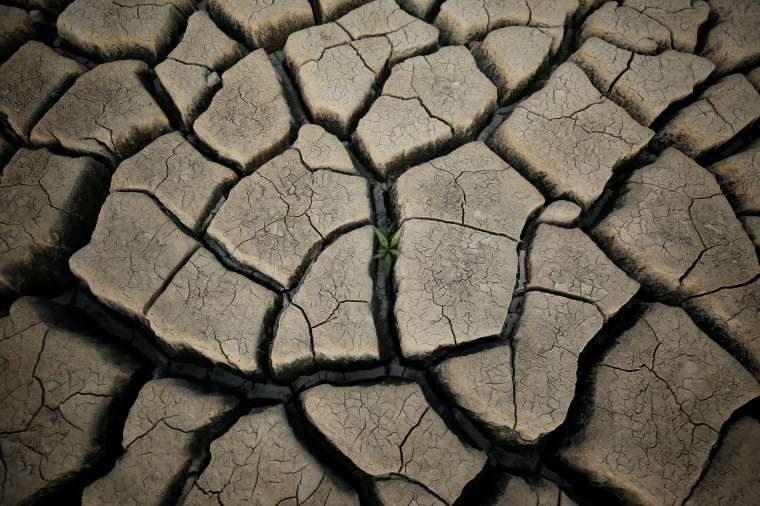 Image: A plant grows in a cracked mud near Cape Town, South Africa