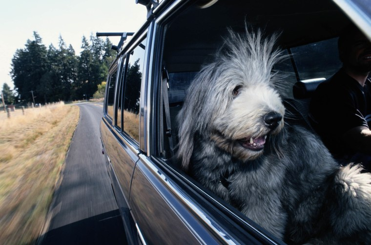 Leaving pets in hot cars can be illegal in some states