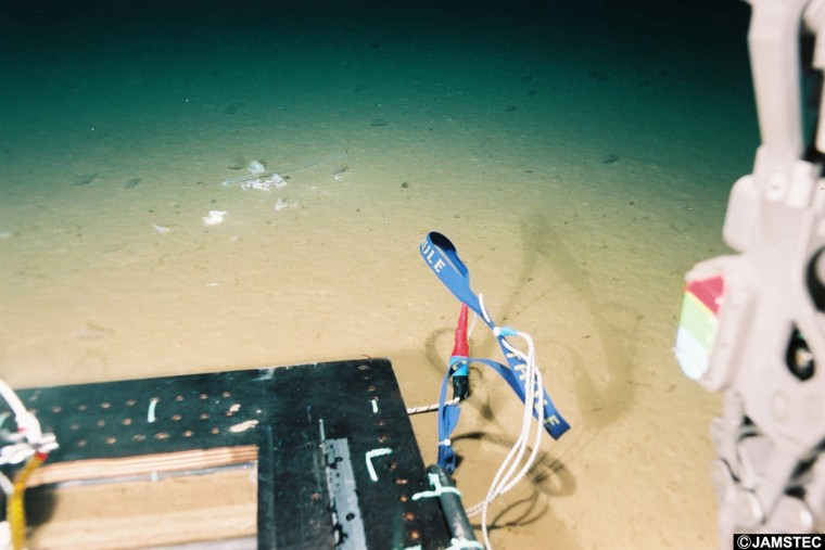 Image: Mariana trench plastic bags