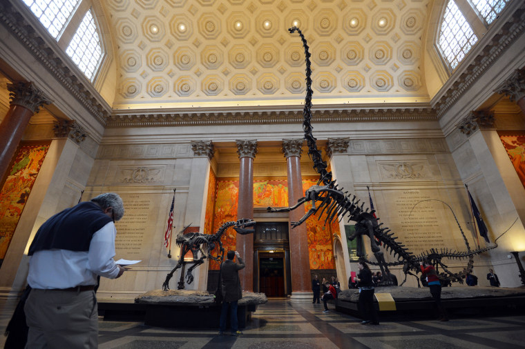 Image:  American Museum of Natural History