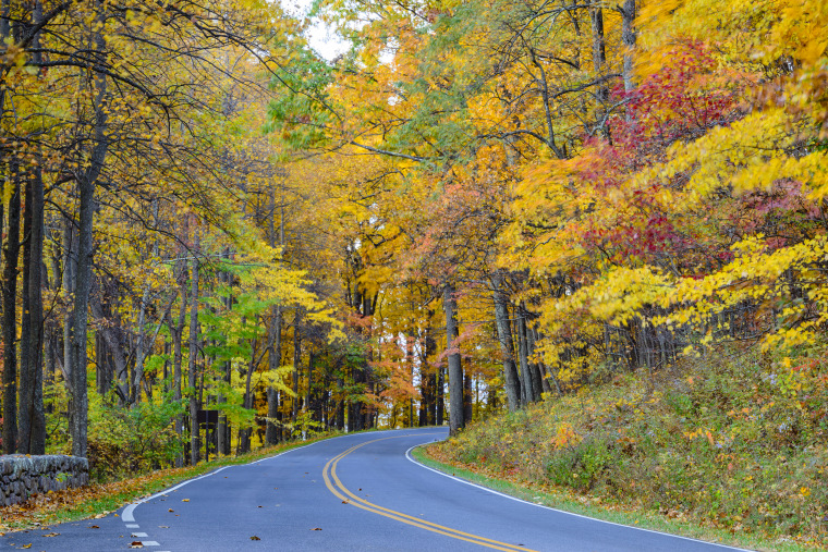 Winding road through autumn forest