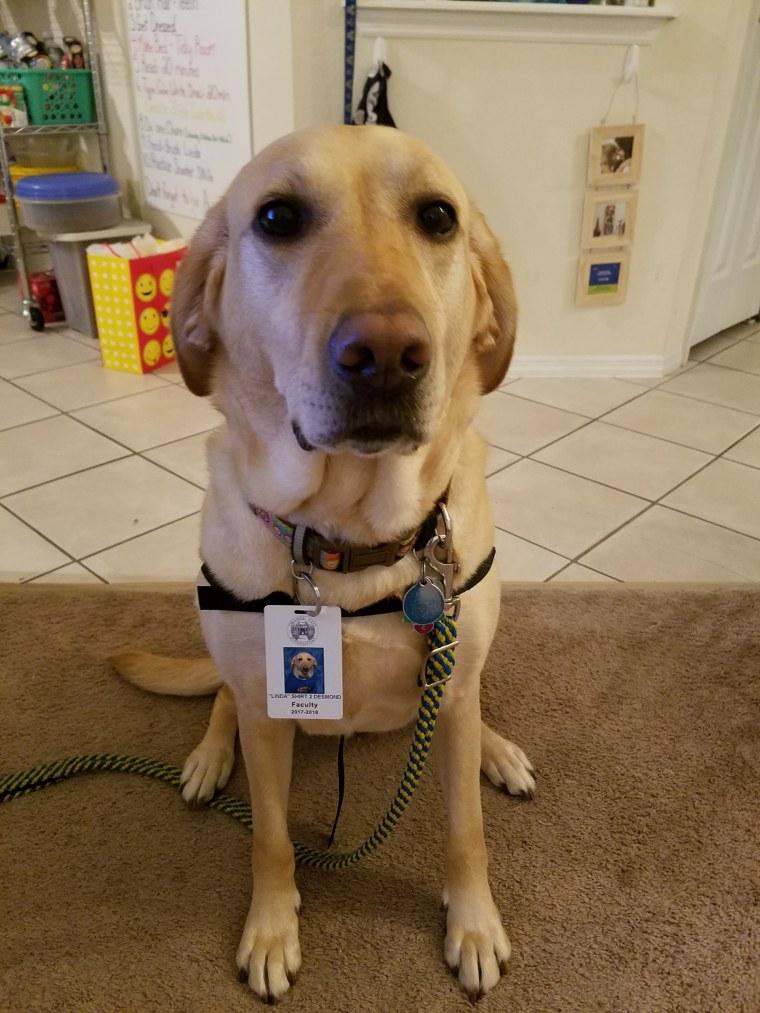 linda service dog