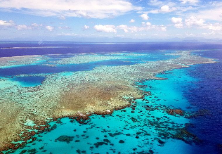 Image: The Great Barrier Reef experiences a catastrophic die-off following marine heat wave, study shows