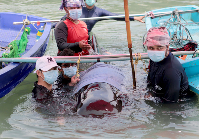 Image: Thai Marine Biologist officials rescue an ailing and immobile short-finned pilot whale at a canal in Songkhla province, southern Thailand, May 30, 2018.