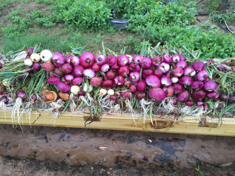 The McHaneys' harvest.