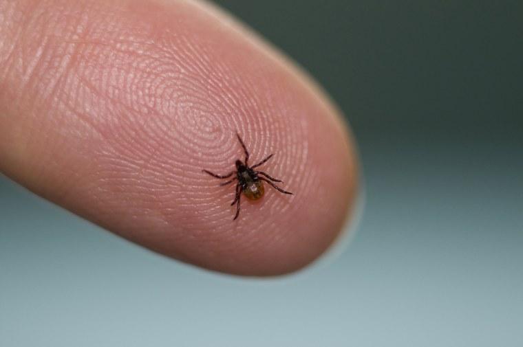 Image: Deer tick, Ixodes scapularis, on a fingertip