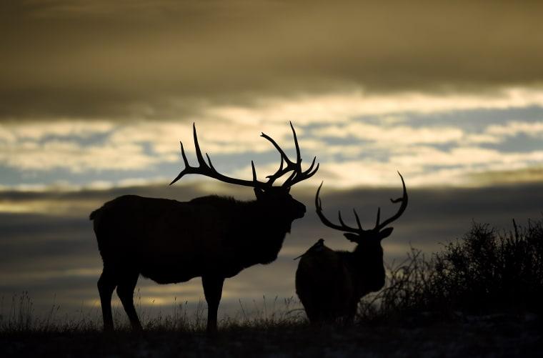 Family travel guide: Estes Park, CO elk
