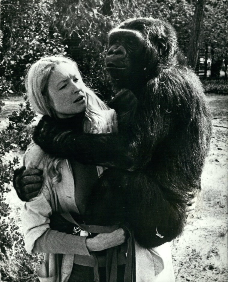 "Koko the gorilla, who died in her sleep Tuesday, with animal psychologist, Francine ""Penny"" Patterson"