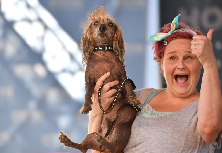 Image: World's Ugliest Dog Contest