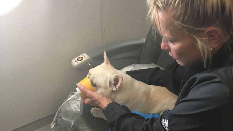 JetBlue crew saves French bulldog on flight
