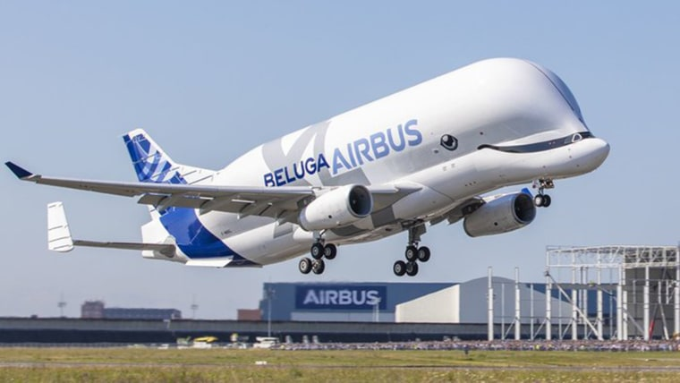 Beluga Whale Plane