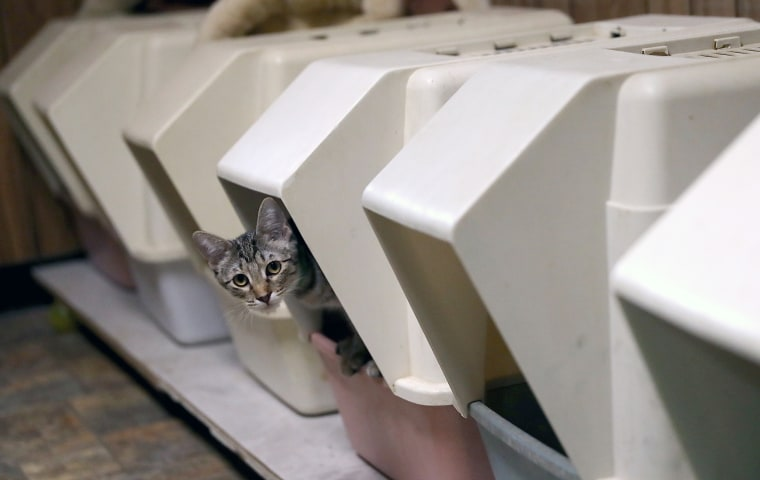 Image: A cats steps out of a litter box at The Cat House on the Kings on Aug. 25, 2017 in Parlier, California