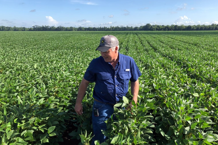 Image: Soybean farmer Schexnayder Jr. overlooks his farm outside Baton Rouge in Erwinville