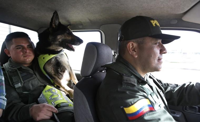 Image: Police Dog Sombra