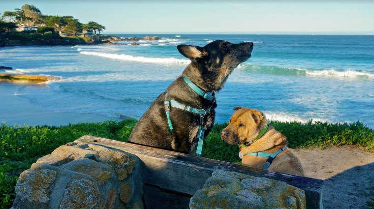Couple takes dogs on 15,000-mile road trip