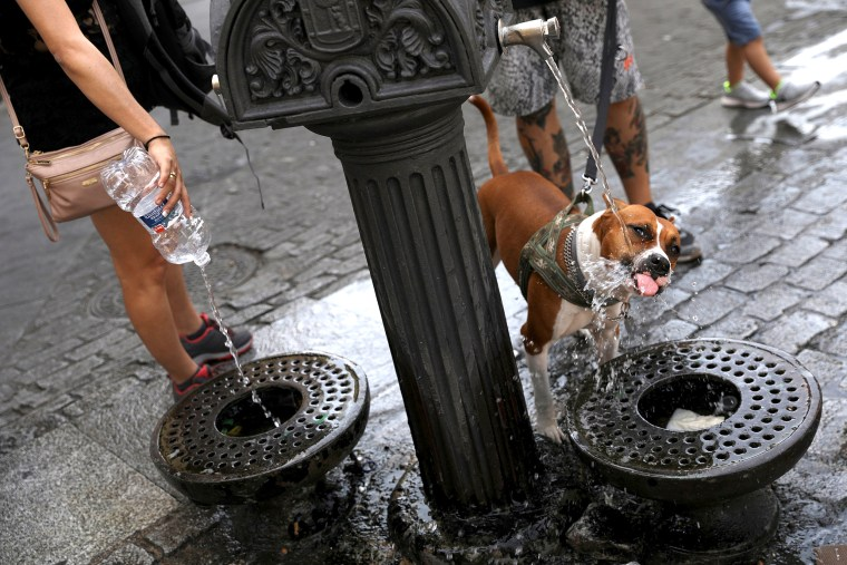 Image: A dog drinks water from a public fountain as temperatures soar throughout the country, in Madrid
