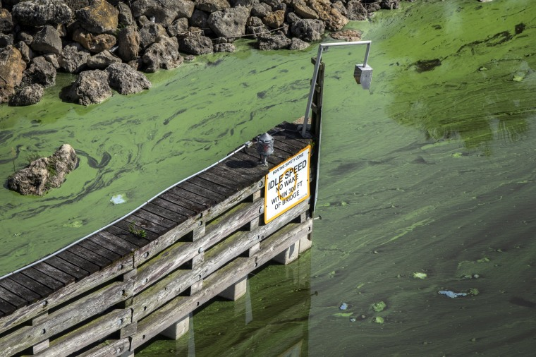 Image: Blue-Green Algae