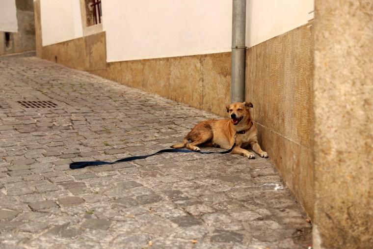Image: Lisbon heatwave