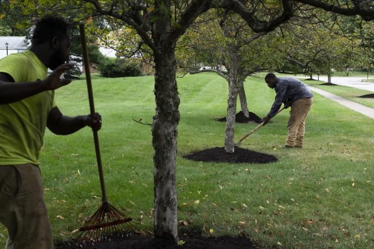 Image: Turfscape Inc. Landscape Technicians rake piles of manure
