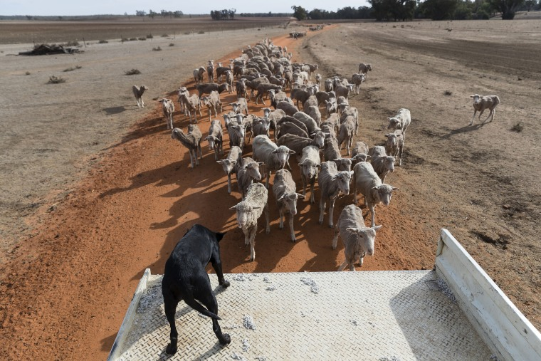Image: New South Wales Farmers Battle Crippling Drought