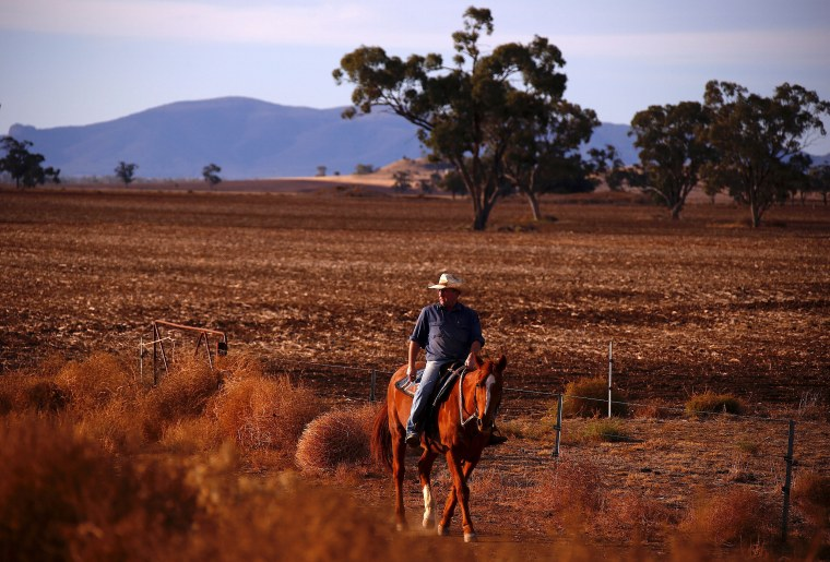 Image: Farmer Scott Cooper rides his horse through a drought-effected paddock on his property named 'Nundah', located south of the central New South Wales town of Gunnedah