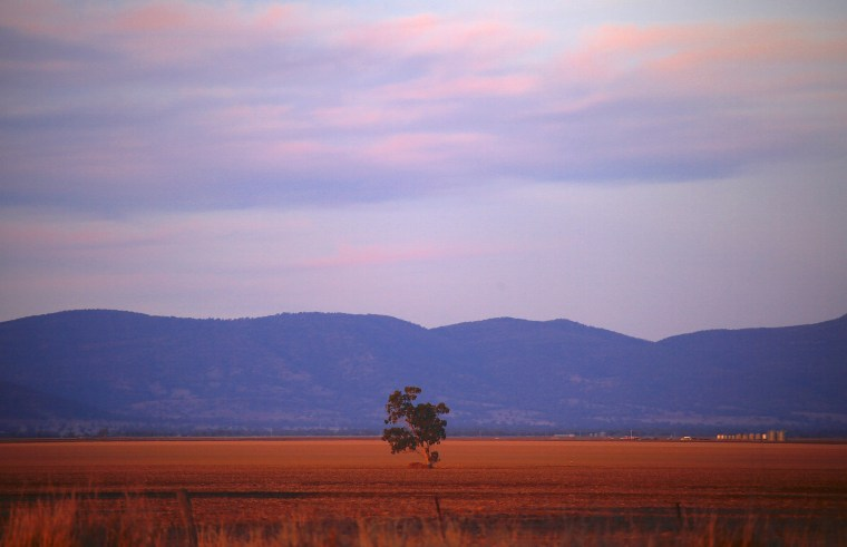 Image: A lone tree can be seen in a drought-affected paddock on farmer Scott Cooper's property named 'Nundah' located on the outskirts of the central New South Wales town of Gunnedah