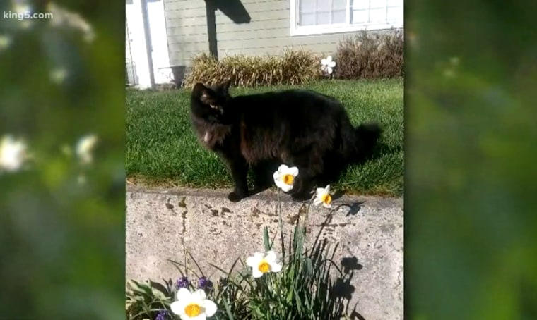 One of the cats killed in Washington's Thurston County that police say may be the work of a serial cat mutilator.