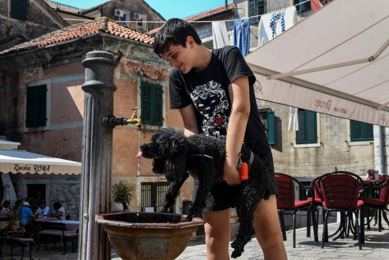 Image: A boy helps a dog to drink water in Montenegro