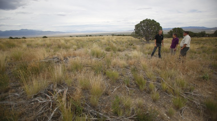Image: Rehabilitated grasses and sage brush in greater sage grouse habitat in Tooele County, Utah