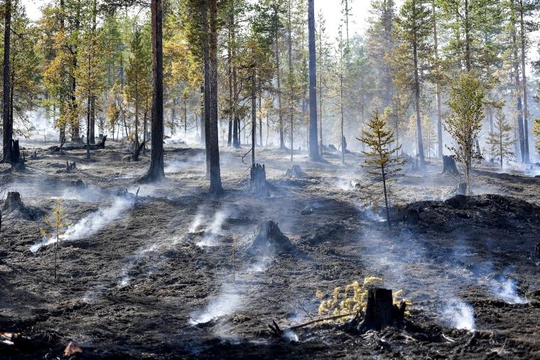 Image: Sweden heatwave