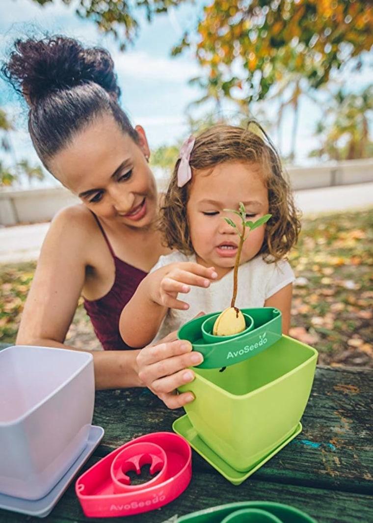 Grow avocados at home: AvoSeedo Bowl Set Grow Your Own Avocado Tree, Evergreen, Perfect Avocado Tree Growing Kit for Every Avocado Lover with Plan Pot - Green & Green