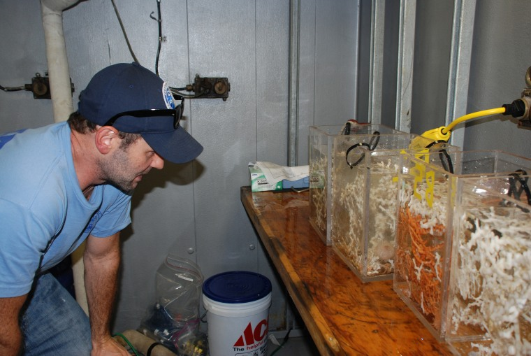 Image: Erik Cordes inspects the coral filled biobox missions after a dive