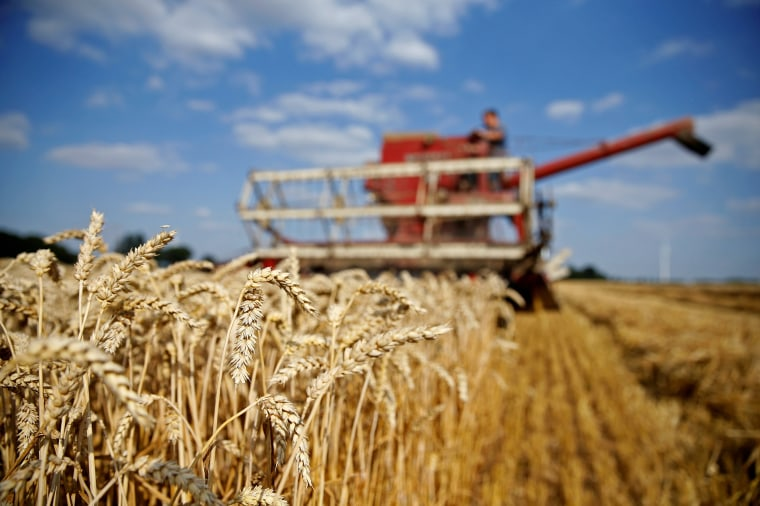 Image: FILE PHOTO: Arnaud Caron, a French farmer drives an old Mc Cormick F8-413 combine as he harvests his last field of wheat, in Vauvillers