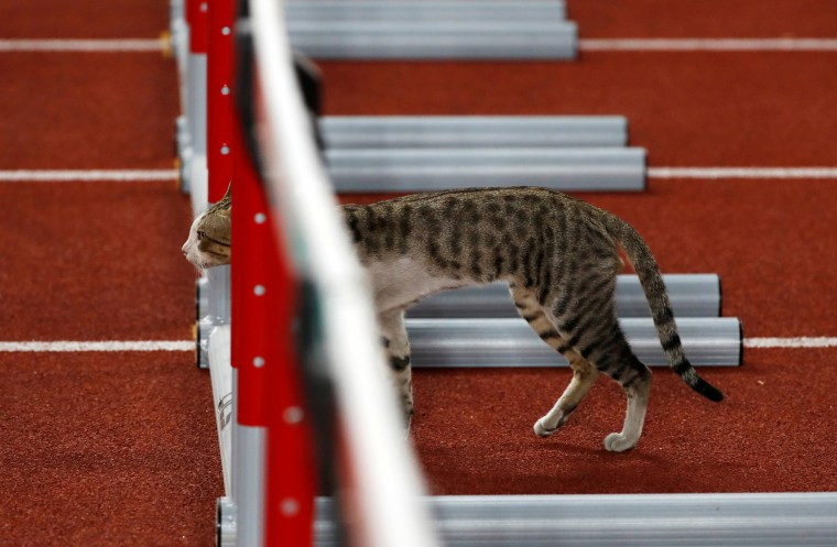 Image: A cat wanders onto the track ahead of a race at the 2018 Asian Games