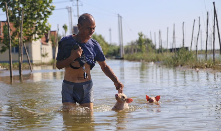 Image: A man wades through a flooded street with two pigs following Typhoon Rumbia