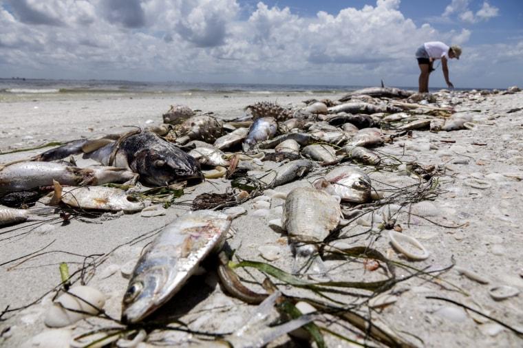 Image: Red Tide Florida