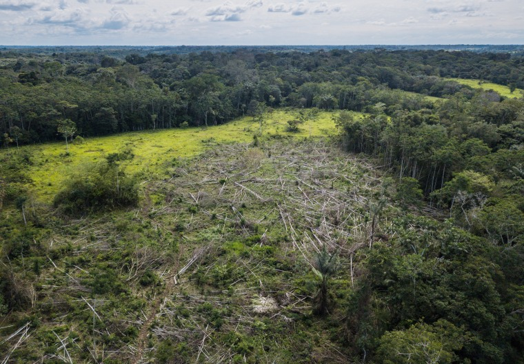 Recently deforested land in Caquet? Department, southern Colombia.