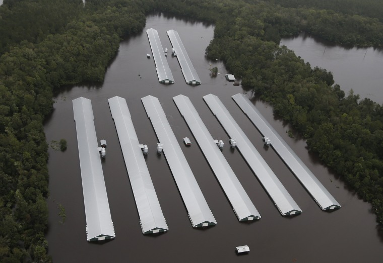 Image: Chicken farm buildings are inundated with floodwater from Hurricane Florence near Trenton