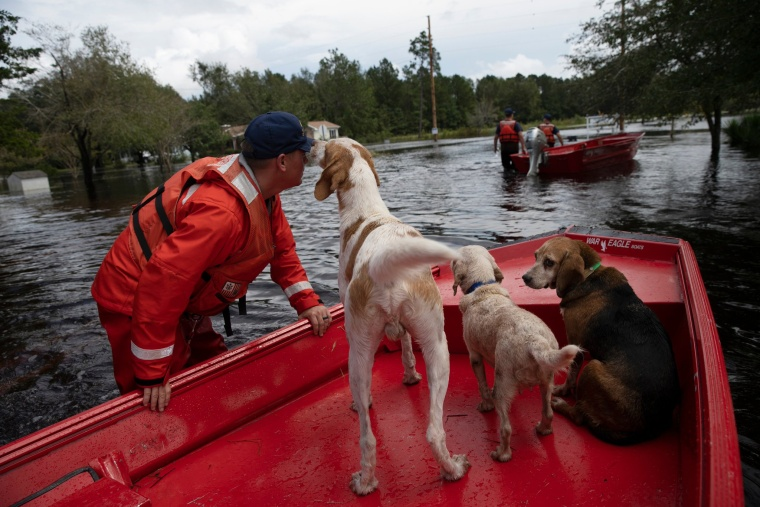 Coast Guardsman Taylor Elliot rescues dogs who were left behind in flooded areas of Columbus County, NC on September 17, 2018.