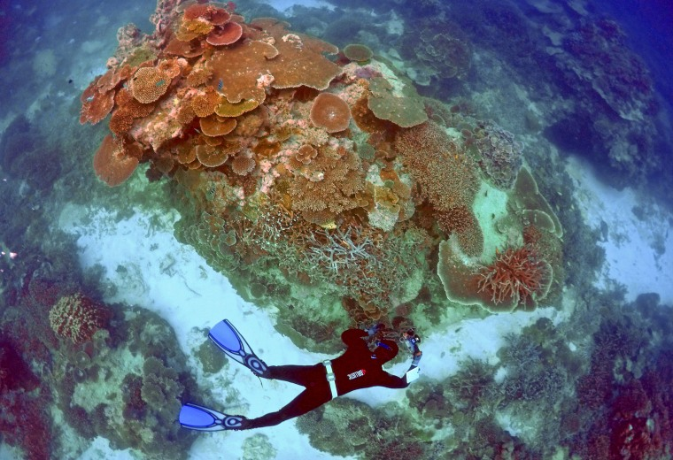 Image: Oliver Lanyon takes photographs and notes during an inspection of the reef's condition in an area called the 'Coral Gardens' located at Lady Elliot Island