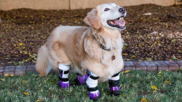 Humane Society hero dog