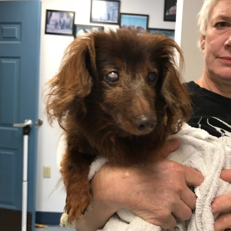 Missing dachshund reunited with family
