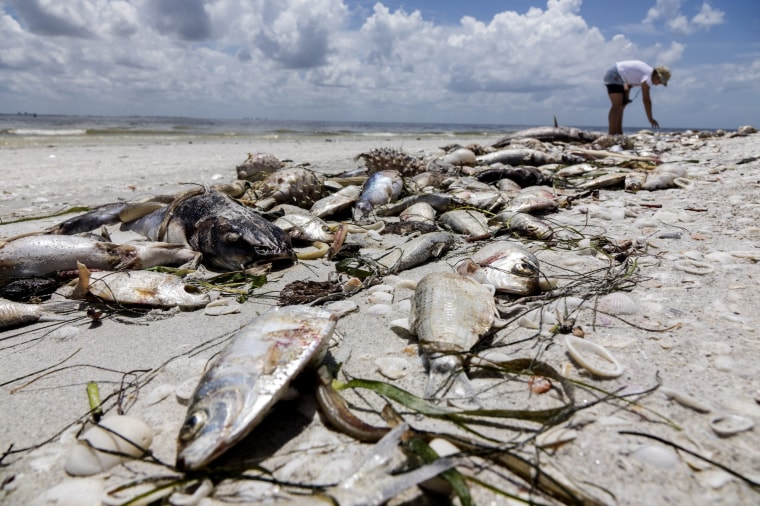 Image: Red Tide Florida