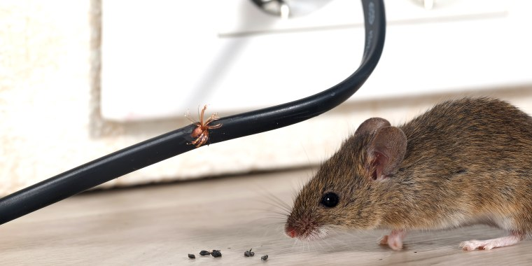 How to get rid of mice and rats