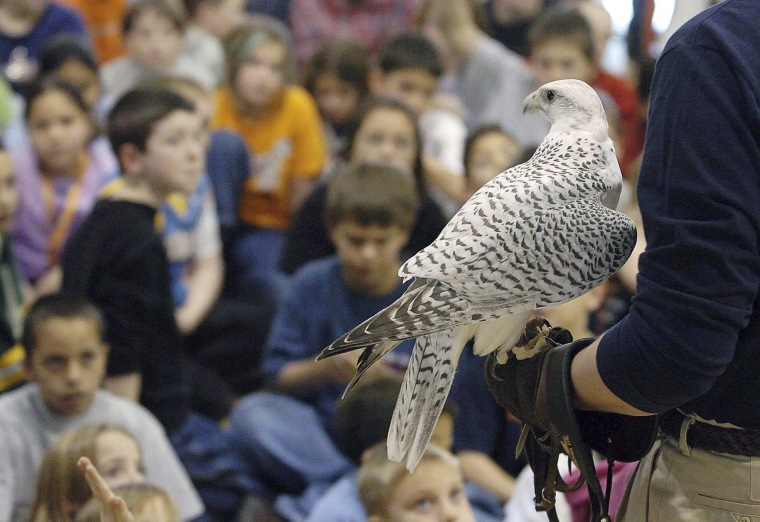 Image: Aurora, a rare white gyrfalcon and Air Force Academy mascot